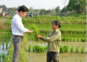 Cán bộ nông lâm xã Đông Cuông hướng dẫn nông dân chăm sóc, phòng trừ sâu bệnh hại lúa xuân.