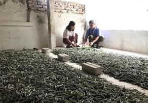 Ông Nguyễn Minh Tâm ở thôn Phố Hóp - một trong những điển hình tiên tiến học và làm theo Bác về phát triển kinh tế, đang giới thiệu với cán bộ xã về mô hình trồng dâu nuôi tằm của ông.