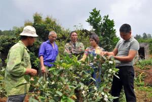 Ông Phạm Văn Đương (đứng giữa) trao đổi với các hộ dân về kỹ thuật chăm sóc cây ăn quả.