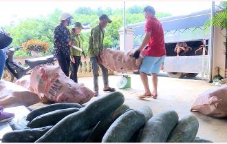 Nỗ lực chuyển đổi ở vùng quả Trần Phú