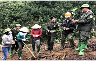 Hiệu quả từ Đề án hỗ trợ trồng quế ở Yên Bái