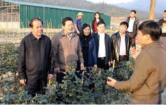 Phó Bí thư Thường trực Tỉnh ủy Tạ Văn Long kiểm tra mô hình kinh tế tại xã Nậm Khắt