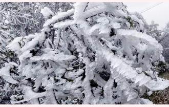 Rét đến 3 độ C, đỉnh đèo Khau Phạ (Mù Cang Chải) xuất hiện băng giá