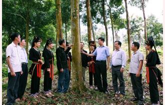 Phần 2: Thơm nồng quế Văn Yên