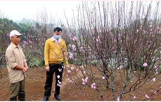 Rộn rã làng hoa xuân Yên Bái
