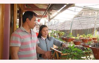 Tuổi trẻ thị xã Nghĩa Lộ thi đua phát triển kinh tế
