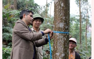 Yên Bái: Hiệu quả trồng rừng gỗ lớn
