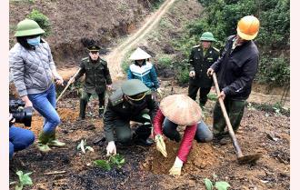 Yên Bái nhân lên phong trào trồng rừng