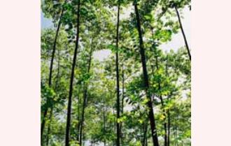 Anh Thụ giàu lên từ kinh tế vườn rừng