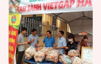 Hội Nông dân Yên Bái hỗ trợ tiêu thụ sản phẩm cam sành Hà Giang