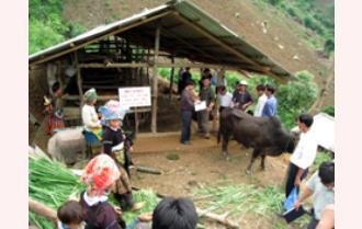 Trạm Tấu: Xây dựng mô hình canh tác bền vững trên đất nương rẫy