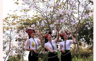 Tháng Ba Nghĩa Lộ, trắng trời hoa ban