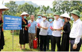 Thường trực Tỉnh ủy Yên Bái thăm một số mô hình phát triển kinh tế và kiểm tra công trình trọng điểm tại huyện Yên Bình