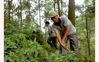 Tỷ phú rừng trên đất Tân Nguyên