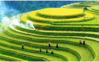 Bước chuyển nông nghiệp Yên Bái