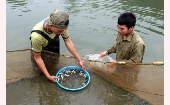 Yên Bái phát huy tiềm năng nuôi trồng thủy sản