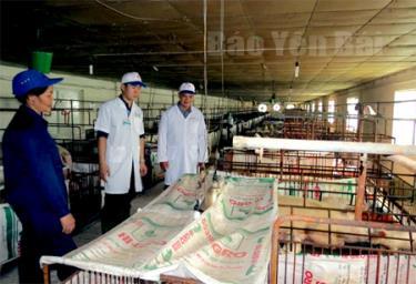 Cán bộ Chi cục Quản lý Chất lượng Nông lâm sản và Thủy sản Yên Bái kiểm tra các cơ sở chăn nuôi gia súc.