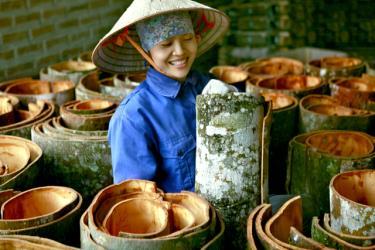 Cây quế là sản phẩm chủ lực của huyện Văn Yên.
