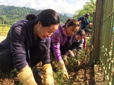 Cán bộ, công chức Cơ quan tham mưu giúp việc chung Khối MTTQ và các đoàn thê chính trị-xã hội huyện trồng đường hoa tại xã Khai Trung