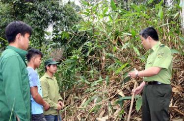 Cán bộ Trạm Kiểm lâm Cầu Gỗ thường xuyên phối hợp với các tổ đội bảo vệ rừng ở các xã tuần tra rừng.