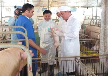 Bộ trưởng Bộ NN&PTNT kiểm tra trại lợn ATSH tại Hưng Yên
