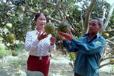 Ông Phạm Duy Vượng chia sẻ kinh nghiệm trồng bưởi với bà con trong thôn.