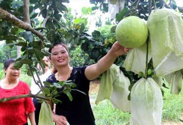 Chị Đào Thị Lý giới thiệu mô hình trồng cây ăn quả cho khách đến tham quan, học hỏi kinh nghiệm.