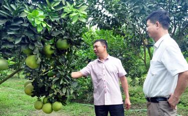 Đến nay xã Hưng Thịnh, huyện Trấn Yên có 207 ha cây ăn quả, trong đó 94 ha đã cho thu hoạch.