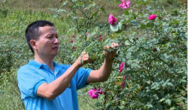 Anh Đinh Văn An chăm sóc vườn hoa hồng cổ.