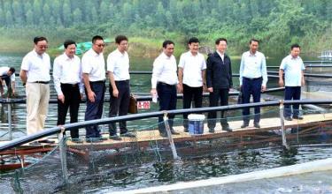 Huyện Yên Bình tăng cường xúc tiến đầu tư phát triển du lịch vùng hồ Thác Bà.  Ảnh: Đoàn công tác của tỉnh Vân Nam (Trung Quốc) tham quan mô hình nuôi cá lồng trên hồ Thác Bà.