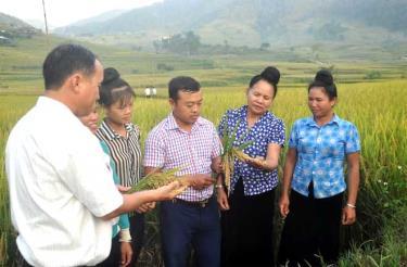 Kỹ sư Hảng A Thào và Tráng A Của trao đổi kỹ thuật canh tác lúa hàng hóa với nông dân xã Hát Lừu.