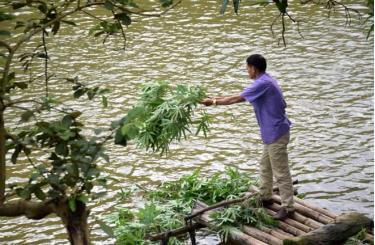 Với 2 mẫu ao nuôi cá thịt các loại, gia đình ông Nguyễn Văn Tham có nguồn thu nhập ổn định hàng năm.