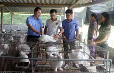 Ông Giàng A Câu - Chủ tịch Hội Nông dân tỉnh thăm HTX Dịch vụ chăn nuôi Lâm Thượng, huyện Lục Yên.