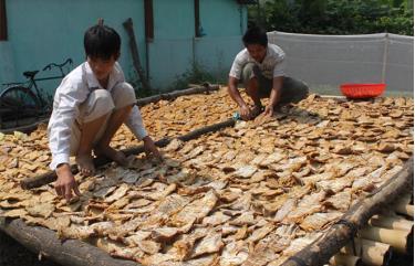 Măng mai - một sản phẩm thế mạnh của nông nghiệp Lục Yên.