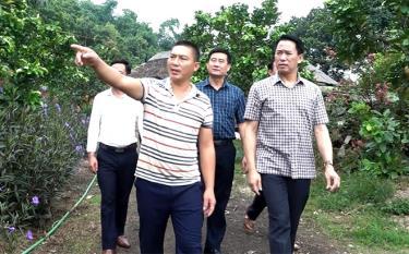 Lãnh đạo huyện Văn Yên thực tế một mô hình trồng cây ăn quả tại xã Châu Quế Hạ.