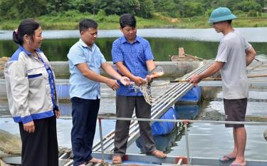 Lãnh đạo xã Phan Thanh thăm mô hình nuôi cá lồng của Hợp tác xã Thủy sản Phan Thanh.