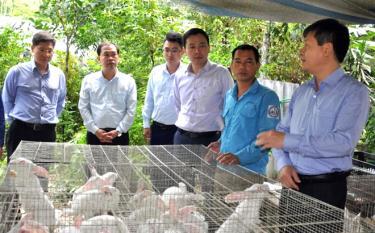 Đồng chí Ngô Hạnh Phúc - Phó Chủ tịch UBND tỉnh (ngoài cùng bên phải) cùng đoàn công tác của tỉnh thăm mô hình chăn nuôi thỏ tại xã Đại Đồng.