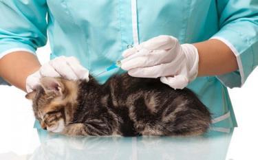 Các hộ dân trong tỉnh phải thực hiện nghiêm việc tiêm phòng vắc xin dại cho chó, mèo, phấn đấu tiêm phòng cho 70% tổng đàn trong năm 2020 (ảnh minh họa).