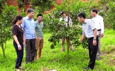 Tran Yen district grows orchards with high economic value.