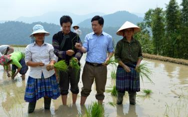 Bí thư Lù A Dờ (áo đen) và lãnh đạo xã trao đổi ,hướng dân đồng bào Mông canh tác lúa nước.