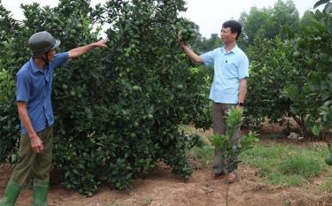 Lãnh đạo xã Đông An tham quan mô hình trồng cây ăn quả có múi của gia đình ông Nguyễn Văn Thuận ở thôn An Khang.