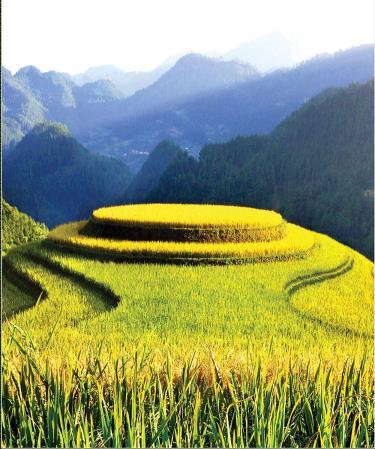 Cảnh quan đẹp như tranh của ruộng bậc thang Mù Cang Chải hấp dẫn nhiều du khách trong nước và quốc tế. Ảnh: Tuấn Nghĩa