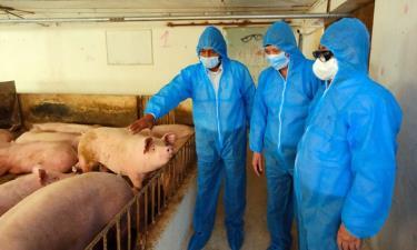 Bộ trưởng Bộ NN-PTNT Lê Minh Hoan khảo sát tình hình chăn nuôi tại HTX Chăn nuôi Hoàng Long (xã Tân Ước, huyện Thanh Oai - Hà Nội).