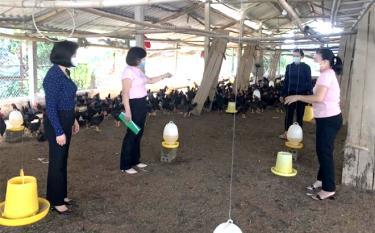 Bà Hoàng Thị Thơm ở tổ dân phố 8, thị trấn Cổ Phúc vay 50 triệu đồng từ nguồn vốn Ngân hàng Chính sách xã hội huyện Trấn Yên đầu tư phát triển chăn nuôi trên 3.000 con gà/lứa.