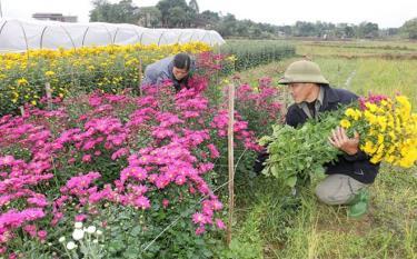 Hội viên phụ nữ xã Tuy Lộc, thành phố Yên Bái đầu tư trồng hoa với vốn vay từ Ngân hàng Chính sách xã hội.
