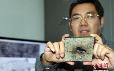 Nhà nghiên cứu Từ Quang Huy và mảnh hóa thạch cá sứt môi vảy sườn. (Ảnh: Chinanews).