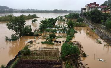 Nước sông Thao tại thành phố Yên Bái đang lên cao. Ảnh chụp lúc 17 giờ ngày 15/10.