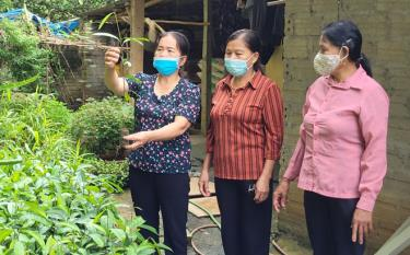 Members of the club in Cau Yen village, Phu Thinh commune of Yen Binh district share experience in growing cinnamon.