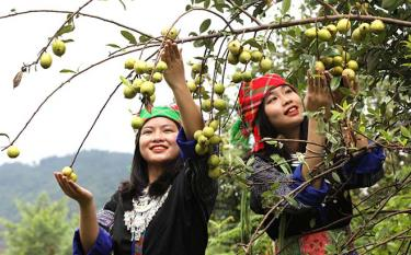 Mong girl standing beside a tao meo tree branch on a ripe rice field is a unique image of Mu Cang Chai in autumn.