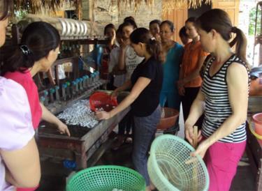 Lớp học nghề sơ chế kén tằm tại xã Tân Đồng.